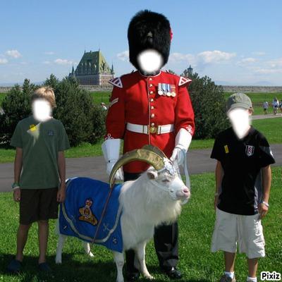 Royal Goat