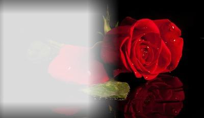 Die Rose der Liebe