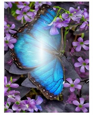 Mariposa turquesa con flores lilas