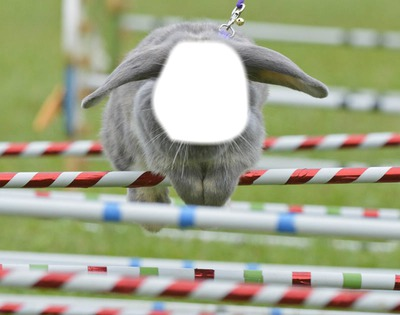 Lapin/Rabbit AGILITY