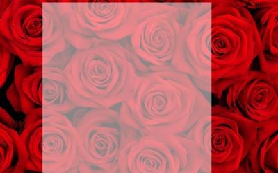 Rose rouge fondu