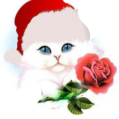 Chat Noel Image photo montage chat noel avec une rose 2 photos - pixiz
