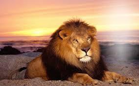 lion d'or