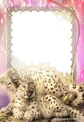 franco due tigri