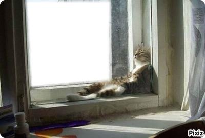 chat détendu