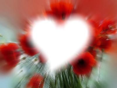 cadre coquelicot et coeur