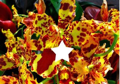 Au milieu des orchidées.