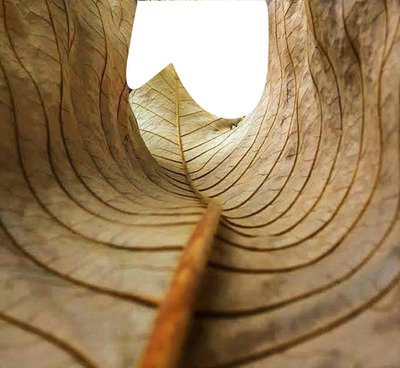ON THE END OF A LEAF TUNEL