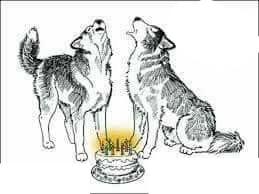 cadre 2 loups joyeux anniversaire 3 photos