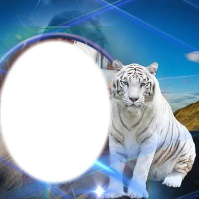 franco tigre bianca