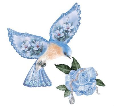 oiseaux bleu