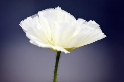 Fleure 2