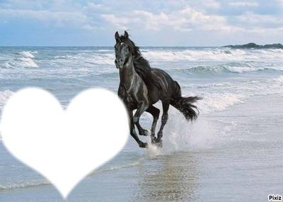 cheval sur la plage