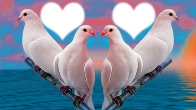 jolies colombes