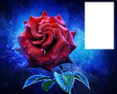 rosa bonita