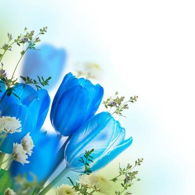 Beautiful flower 11 .