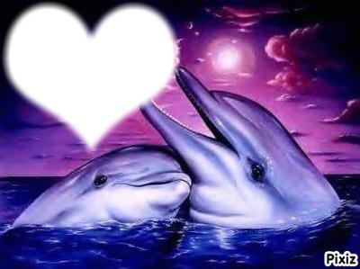 dauphin love