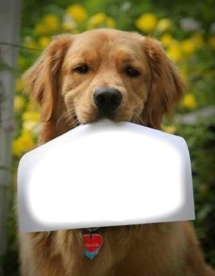 chien 1 photo