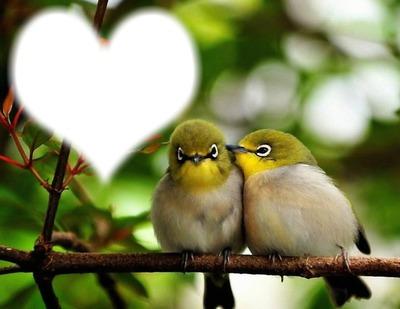 Montaje Fotografico Oiseaux Amoureux Pixiz
