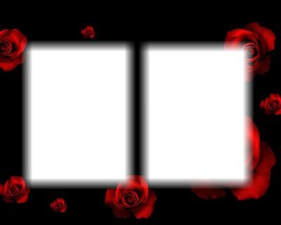 roses rouge fond noir
