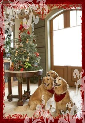 CHRISTMAS WINDOW 2