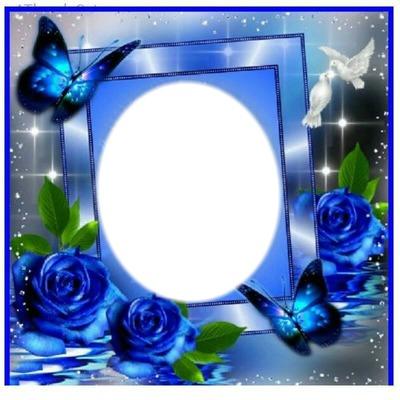Montaje Fotografico Rosas Azules Pixiz