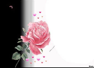 la rose de mon coeur