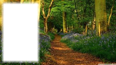Erdő táj 1 kép