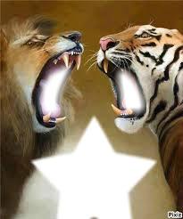 lion et tigre