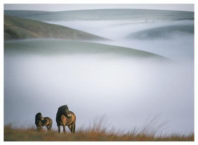 chevaux dans les collines