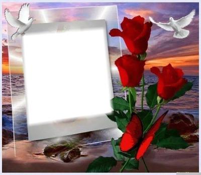 Montaje Fotografico Palomas Y Rosas Pixiz