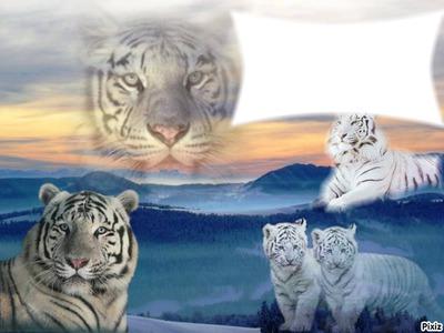 mon tiger