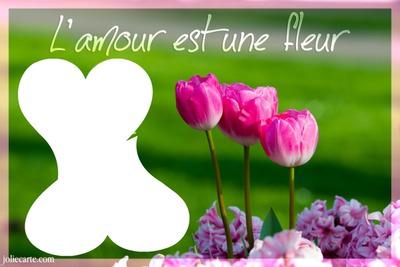 3 jolies tulipe laly