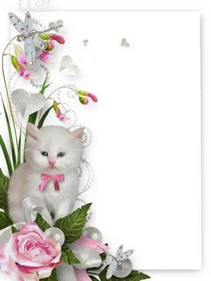 cadre chat avec une rose 1 photo