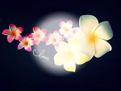 fleur de polynesie