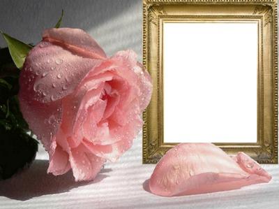 Narozeniny, přání k narozeninám, růže