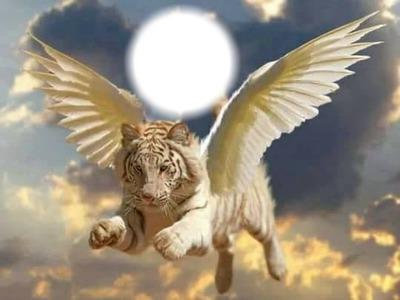 TIGER ANGEL