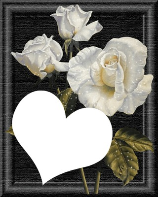 roses blanches laly