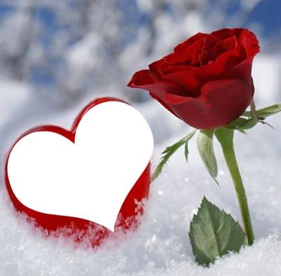 une rose et un coeur dans la neige