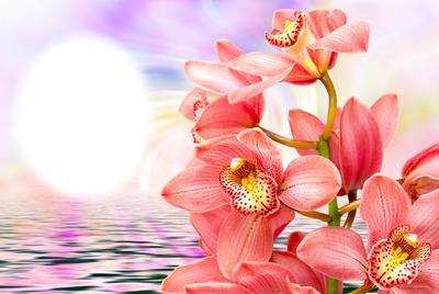 Beautiful flower 12 .