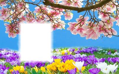 tavaszi táj 1 kép