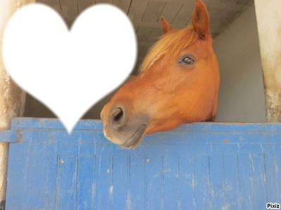 ♥ cheval