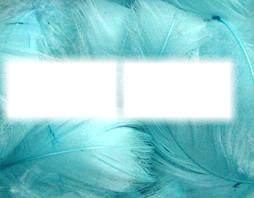 les plumes bleu