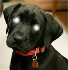 les yeux du chien au pouvoir du paradis