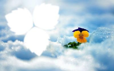 Fleurs*givrées