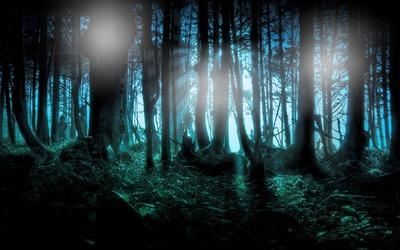 Montage photo Forêt sombre - Pixiz
