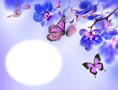 Photo Montage Orchidee Bleue Papillons Fleur Nature Pixiz