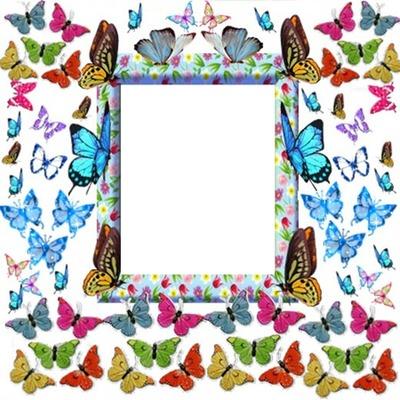 Cc Mariposas