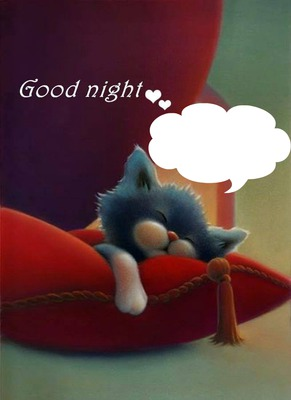 good night avec un chat qui dort 1 photo