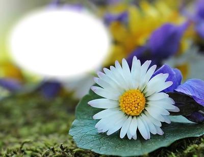 Photo Montage Fleur Marguerite Pixiz